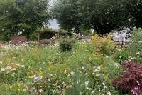 Roe Deer Tavistock Sensory Garden