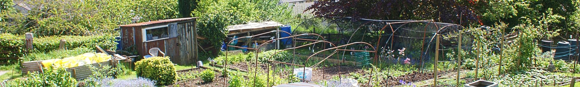 Butcher Park Hill Allotments