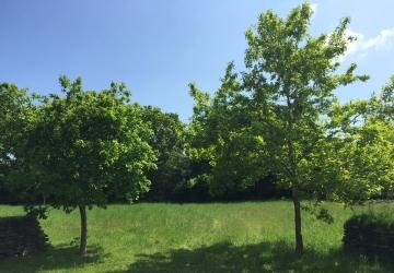 Green Burial Meadow